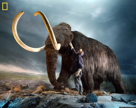 Mammoth madness