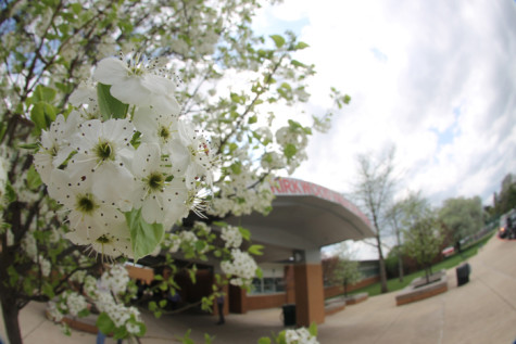 Photo gallery: KHS in bloom