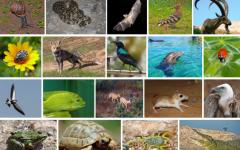 Trivia Tuesday I: Animals