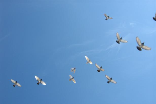 Trivia Tuesday IX: Birds