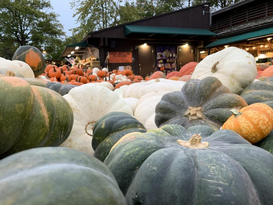 Pictured+are+white+and+green+pumpkins+displayed+neatly+by+the+entrance+of+the+Kirkwood+Farmers%27+Market.