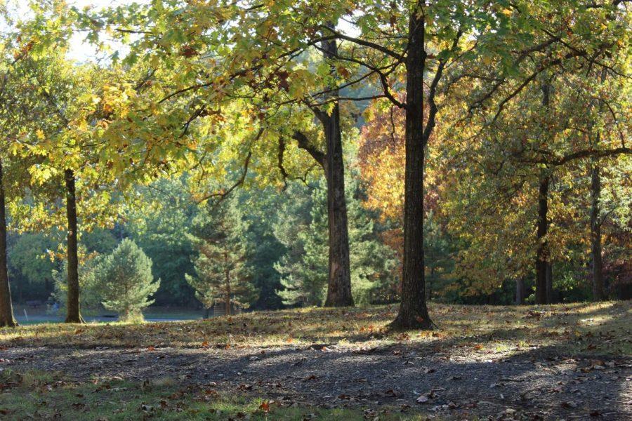 Photo Gallery: Kirkwood in fall