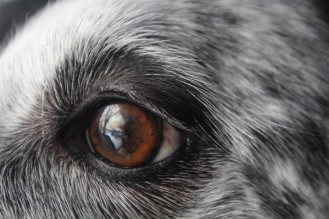 A dog gazes out the window as the reflection from the sun shows in his eyes.